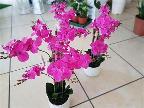 de gasperi fiori nuovi arrivi edg enzo de gasperi florarte fiorista