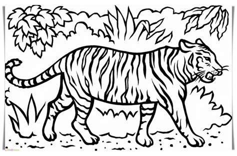 gambar harimau kartun jawa sumatera hitam putih