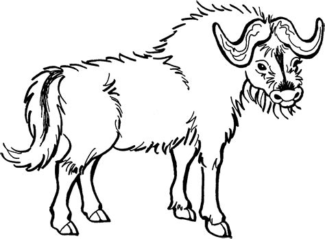 Bison Coloring Pages Free Buffalo And Bison Coloring Pages by Bison Coloring Pages