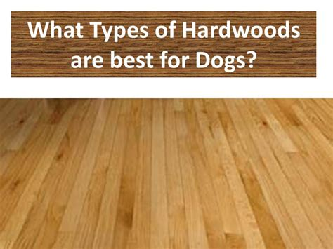 types of hardwood flooring for dogs the flooring girl