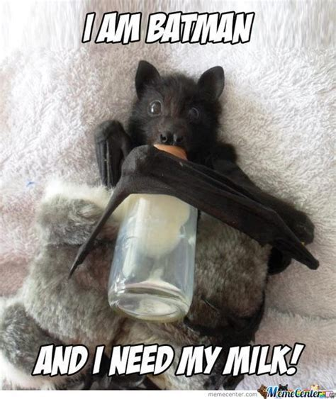 cute bat memes best collection of funny cute bat pictures