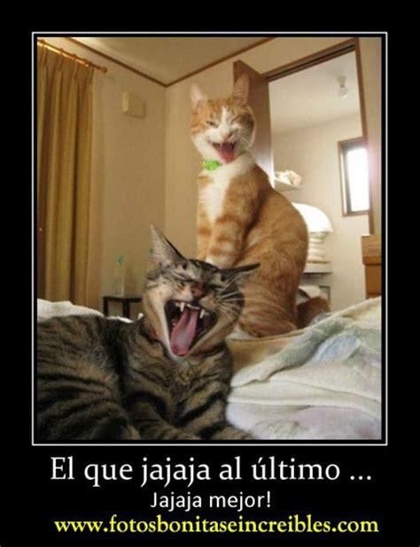 imagenes chistosas jajaj fotos divertidas de gatos imagenes de gatos con frases