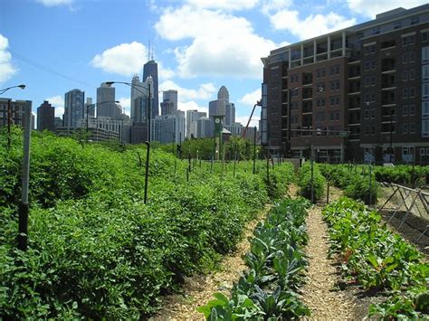 growing a sustainable city the question of agriculture utp insights books the anarchist ecosystem agriculture beyond revolution