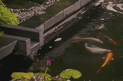 fish pond interior design ideas