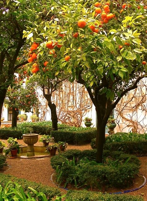 patio orange tree 97 best orange trees images on orange trees