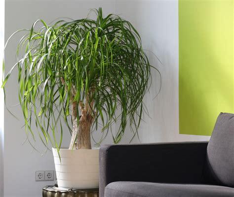 d appartamento 5 benefici delle piante d appartamento lombarda flor