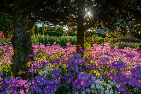 Flower Garden Background High Quality Free Backgrounds Images Garden Flowers