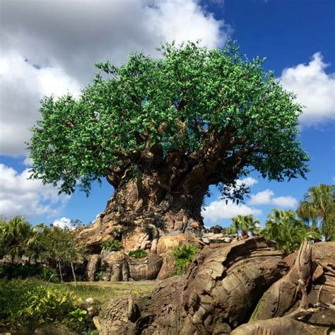 disney tree disney s animal kingdom the tree of