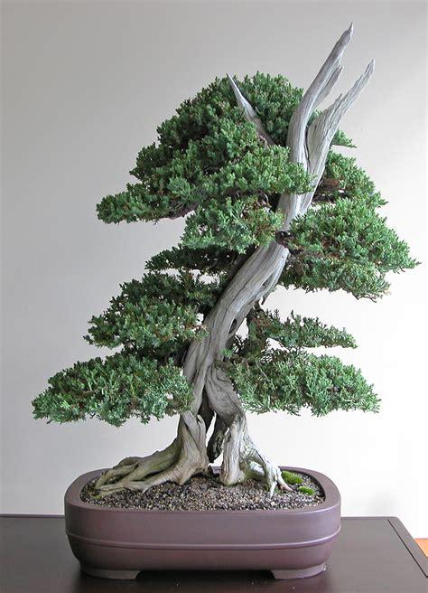 art  bonsai project feature gallery  bonsai