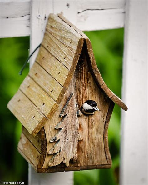 chickadee birdhouse 1 by xstartxtodayx via flickr