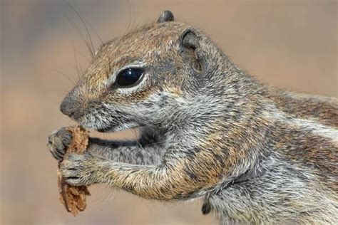 caring  orphaned ground squirrels insights
