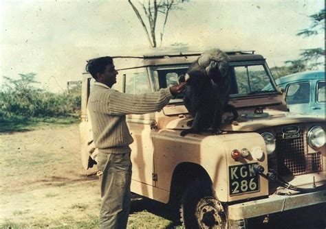 land rover daktari 50 best daktari images on pinterest