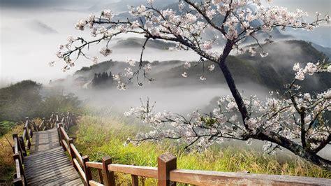 imagenes de paisajes y caminos caminos vida y paisajes hermosas fotograf 205 as palabras