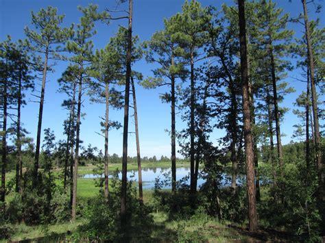 pine esszimmertisch esstisch arizona pine minoroe gt design inspiration