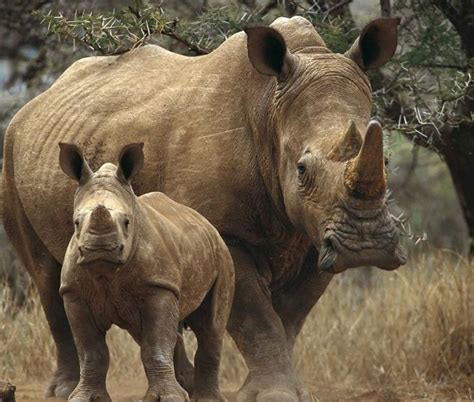 imagenes de xeso animal espectaculares fotos de animales taringa