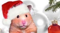 Christmas Hamster Baking Cookies Mrs Emma The