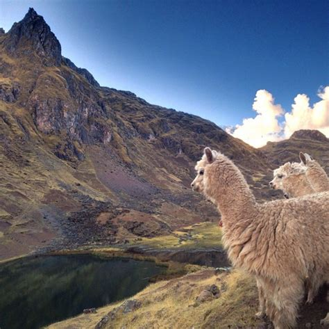 Amazing Light by 8 Day Ayahuasca Retreats In The Sacred Valley Peru