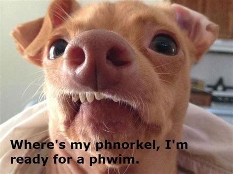 Lisp Meme - 89 best images about lisp meme dog on pinterest 4th birthday pho and funny animal humor