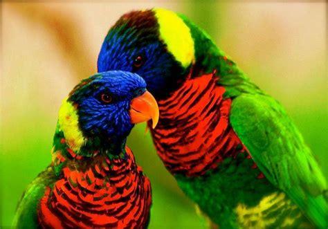 most beautiful colors amazing world fun beautiful colorful birds nature
