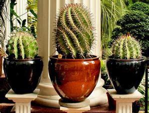 baca fengsui tanaman buat  rumah hiasanrumah