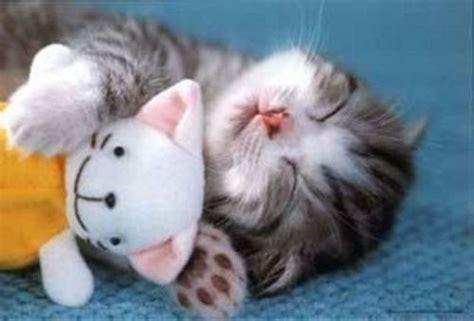 Sho Kucing House Of Anju pet house gambar kucing imut dan lucu