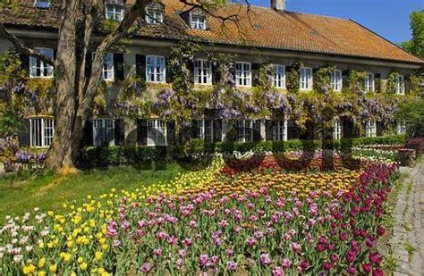 garten tulpe garten tulpe tulipa und blauregen glyzinie wisteria