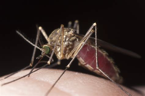 how to tell the difference between spider bites and mosquito bites green pest solutions