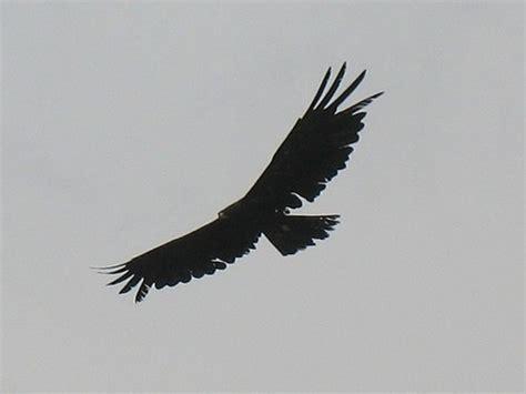minimalist eagle tattoo 23 best wings like eagle s tattoo images on pinterest