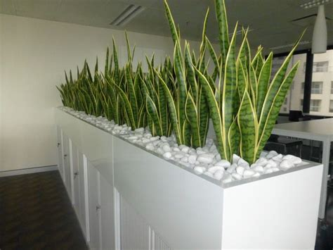 plant partition planter box of mother in law s tongue for a corporate