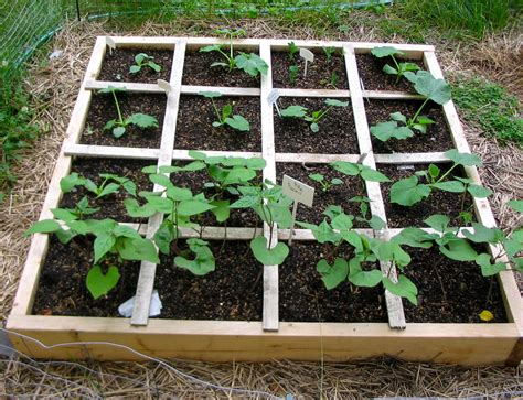 How Many Fit In Square Garden by Experiments In Square Foot Gardening Think Of It As An