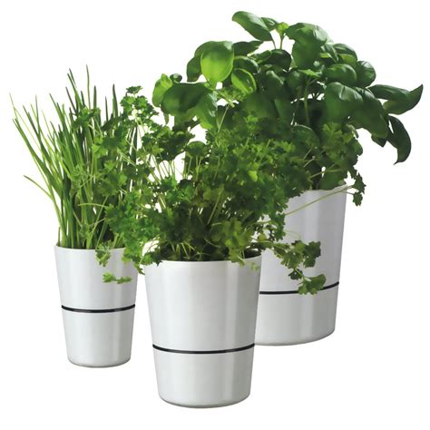 herb pot hydro herbs pot rosti mepal shop