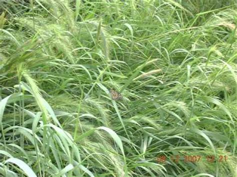 plants in the tropical grassland grassland plants names quotes