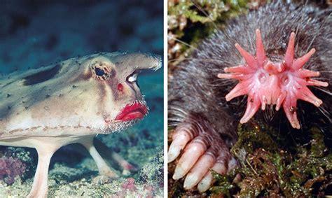 imagenes de animales feos del mundo 7 de los considerados animales m 225 s feos del mundo con