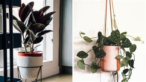 indoor plant types thinking  buying   houseplant