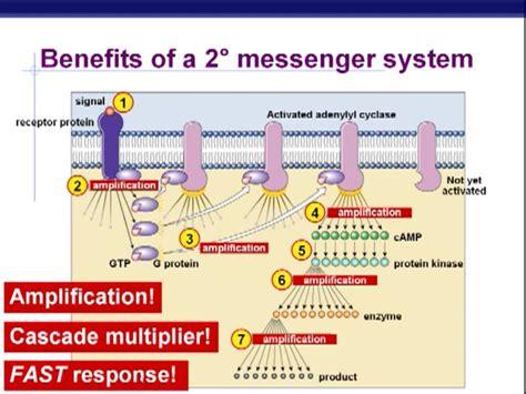 benefits  secondary messenger system cascade