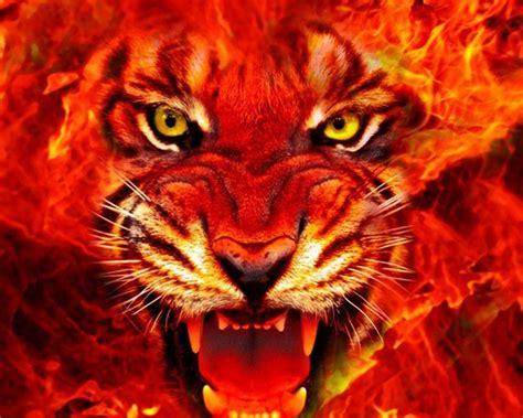 animal tiger face fire  ultra hd wallpapers  desktop