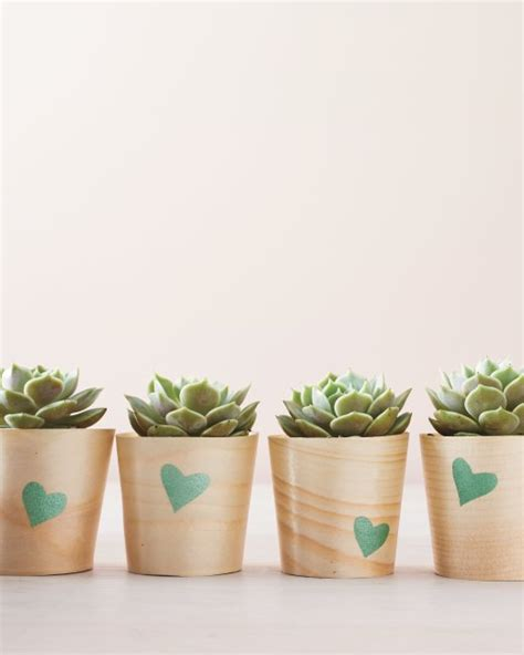 diy succulents the patriot post diy succulent planters