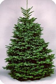 a noble or douglas fir 7ft led tree master gardeners of greater new orleans