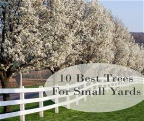 good trees for small backyards 10 best trees for small yards yard pinterest