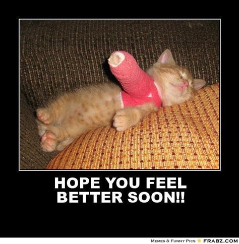 Funny Get Well Soon Memes - feel better animal memes image memes at relatably com