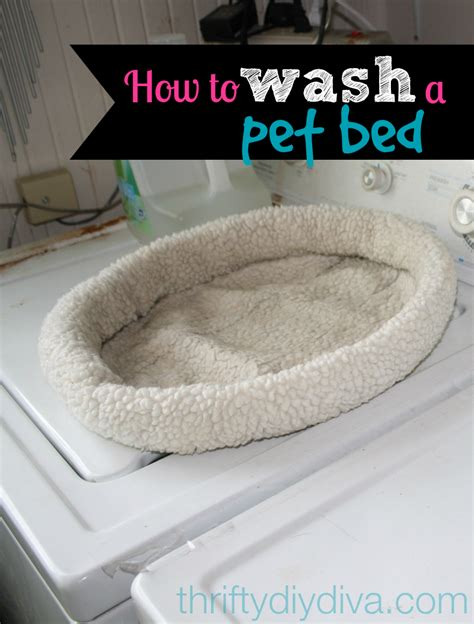 how to wash and clean a pet bed