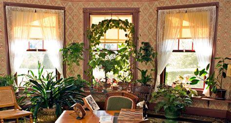 piante da appartamento come curarle piante da appartamento curarle in inverno fai da te in