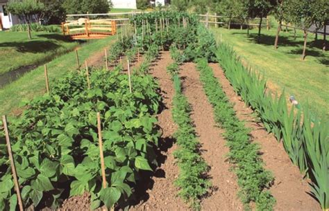 vegetable garden catalogs most beautiful vegetable gardens house decor ideas