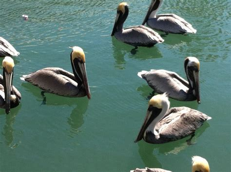 pelican boat key west pelicans harbor walk key west routes and trips