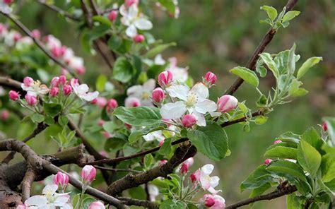 cooperativa il gabbiano cooperativa sociale quot il gabbiano quot le mele