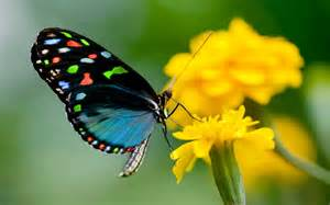 Mobile Home Interior Walls butterfly on yellow flowers so nice images hd wallpapers