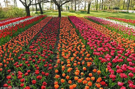 Largest Flower Garden Seven Million Bulbs Bloom To The Beginning Of
