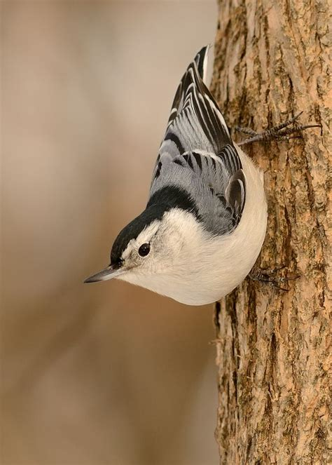 backyard bird watch 194 best images about north american birds on pinterest