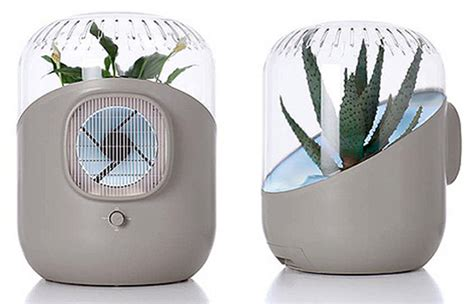 plants  indoor natural air purifiers urban gardens
