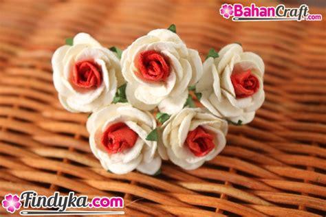 Paku Mawar Paku Mawar Lokal findyka aplikasi bunga mawar sedang putih merah